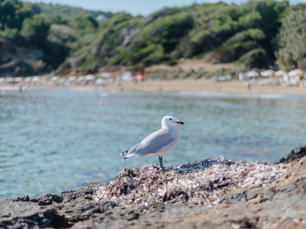 ibiza with kids - our 6 favorite family friendly beaches in santa eularia seagull