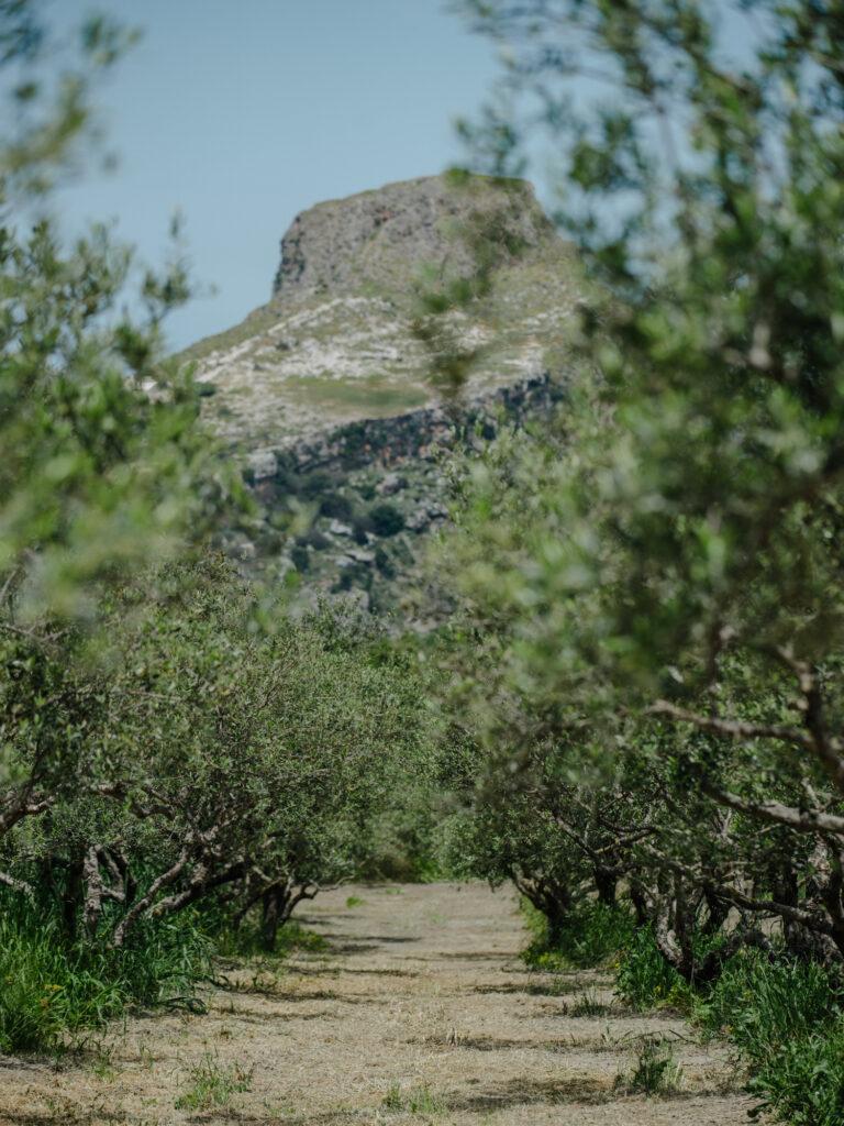 Astrikas Estate Biolea Western Crete