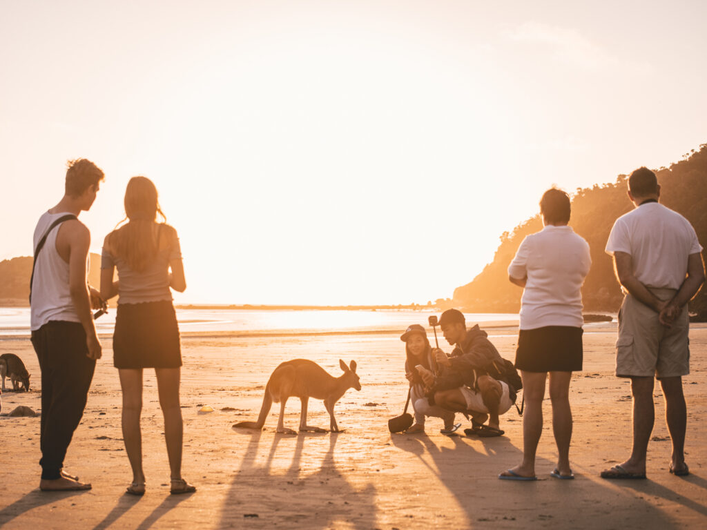 Kangaroos on the Beach at Cape Hillsborough | What You Need to Know Before You go