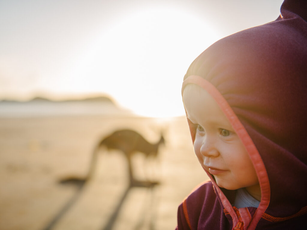Kangaroos on the Beach at Cape Hillsborough   What You Need to Know Before You go